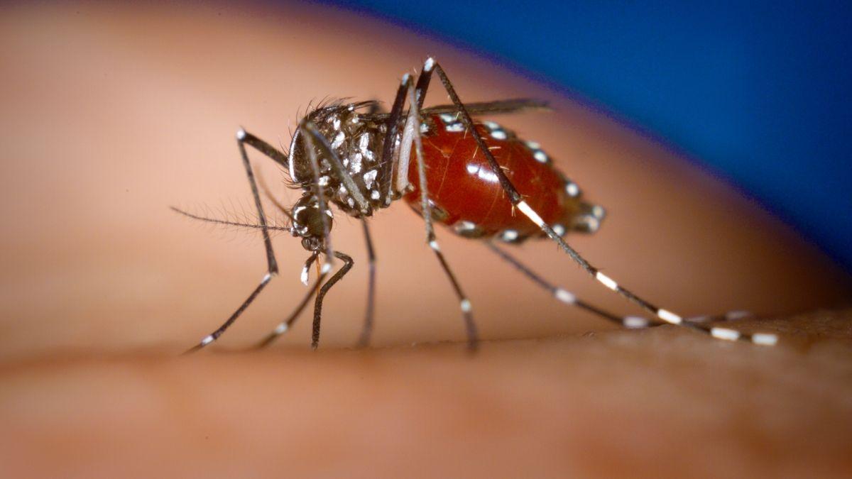 6 triệu chứng sốt xuất huyết và cách phòng bệnh